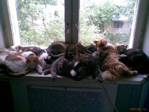 Проблемы содержания домашних животных в квартире