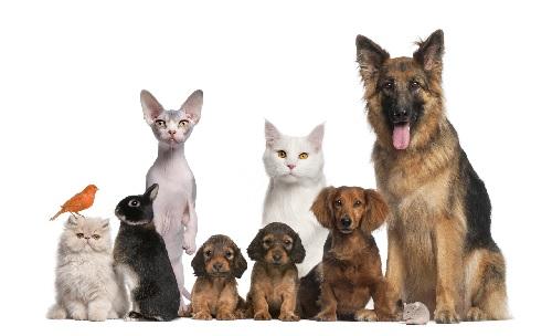 Правила содержания домашних животных в жилом многоквартирном доме